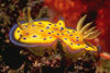 nudibranch: psychedelic seaslug