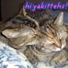 hiyacynth: hiyakittehs