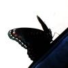 perljam userpic