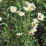 noxious_weeds userpic