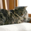 zackcat userpic