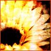 emopoet userpic