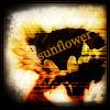 (other) sunflower