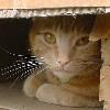 cats_addictions userpic