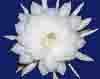 juniperblue userpic