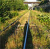 trainyard_owl userpic