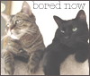 soundingsea: personal - kitties - bored now