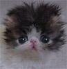 cat (с) illusionicons