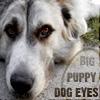 Dualbunny: puppyeyes