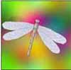 dianadragonfly userpic