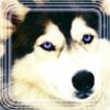 deepdarkwolf userpic