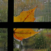 autumn_rain_ userpic
