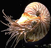 cephalopoid userpic