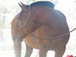 horsesrmylife userpic