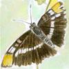kwintt userpic