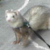 carpetsharks userpic