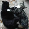 casabooboo userpic