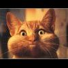 _pussycat__ userpic