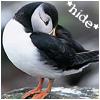 Bright Beak: puffins - hide - kipli