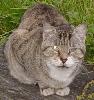 chad_dream_cat userpic