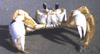 ilovecrabs userpic