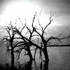 poetictragedy14 userpic