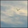 sun_child_ userpic