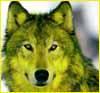 lemonwolf userpic
