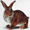 тигрозай