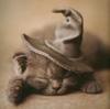 Merlin kitty!