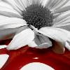 azaleababe userpic