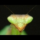 myprayingmantis userpic