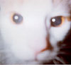 Romeo's Closeup