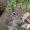 squirrelcsi userpic