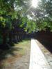 misc pathway