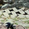 abstractshadows userpic