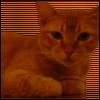 hoshi_no_koe userpic