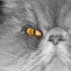 retromango666 userpic