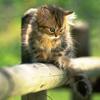 tanis74 userpic