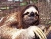 'sup sloth!