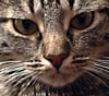 mira_kitty userpic