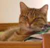can_opener_gato userpic