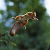 squirrelofdoom userpic