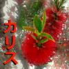 "Karisu | カリス (""sama"" = facetious ^___^)"