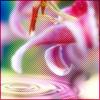 sweetsylvia userpic