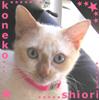 koneko_shiori userpic