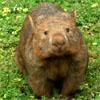 Minerva: wombat