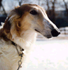 russian_borzoi userpic