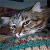 edthecat userpic