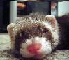 sneaked_curoo userpic